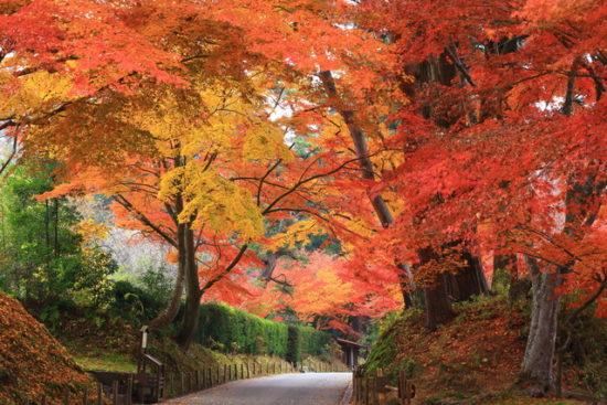 秋の藤原まつり中尊寺月見坂