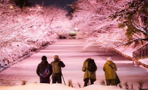 弘前城雪燈籠まつりさくらライトアップ