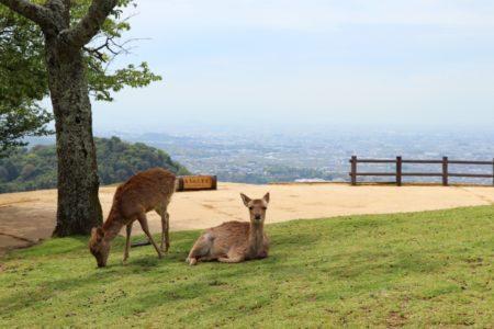 若草山焼き鹿