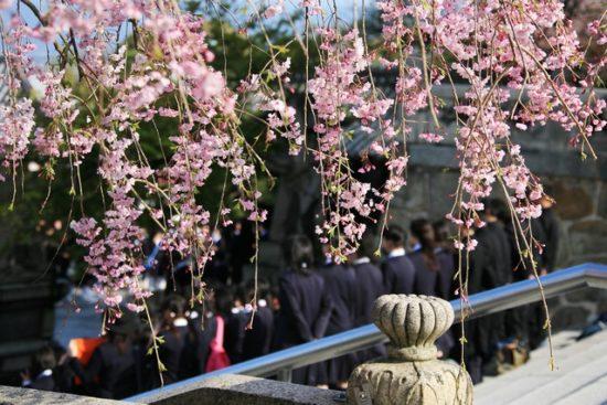 高校生と桜の花