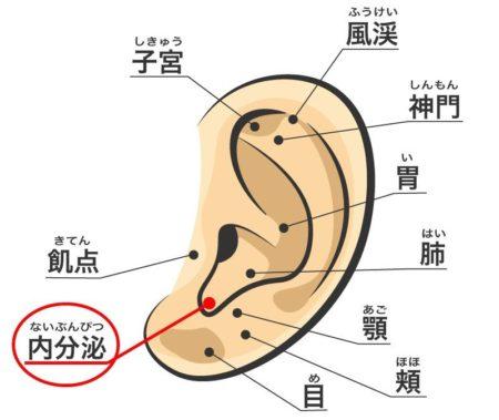 耳ツボ内分泌