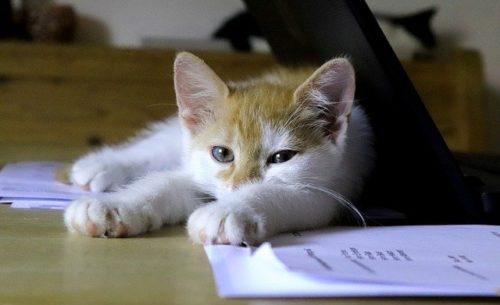 子猫とパソコン