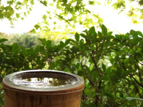竹に溜まる水