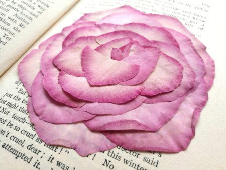 バラの押し花1