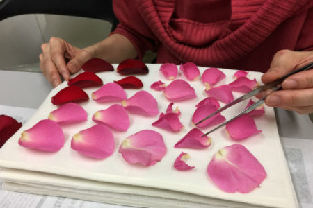 バラの押し花下処理2