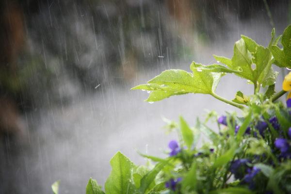 葉っぱと大雨