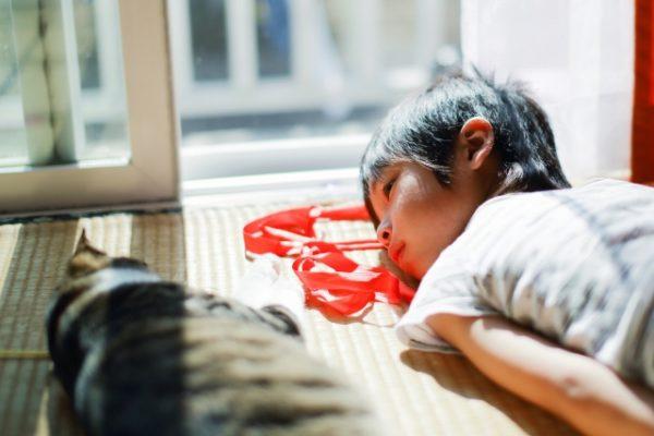 窓辺で猫と子どもが睡眠