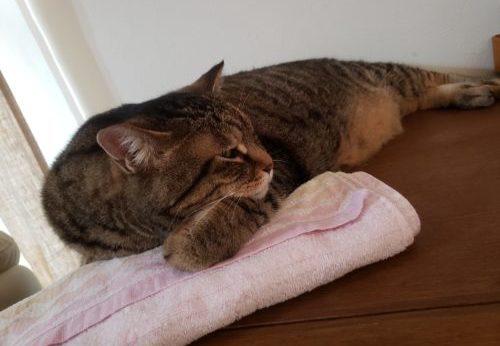 猫と保冷剤