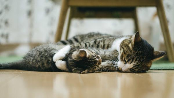 猫の親子の抱っこ