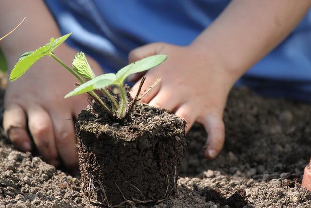 苗を植える子どもの手