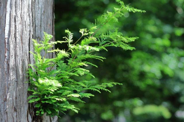 新緑・若葉